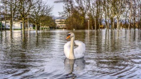 Crue, Voies sur berge… les actualités de la Seine